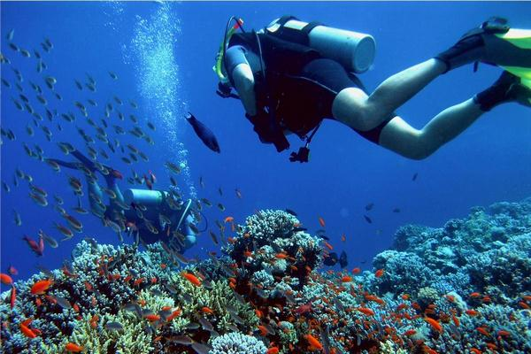 Diving tour: help you see the beauty of nature.