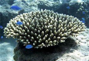 Khám phá thiên nhiên hoang sơ đầy hấp dẫn nhất tại Cát Bà- Hải Phòng